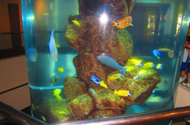 Under Waterworld Sentosa - Singapore
