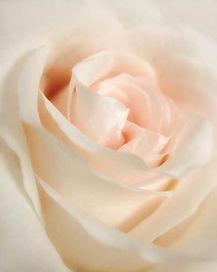 transformational rose.jpg