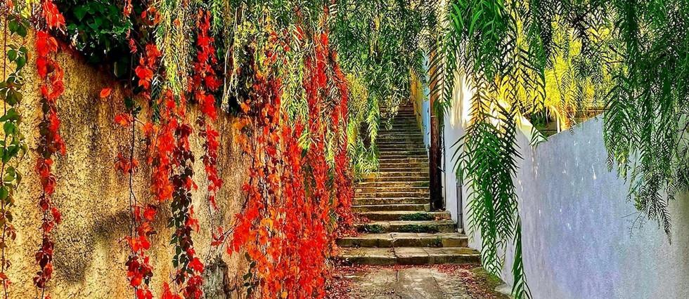 Couleurs d'automne à Bompard, Marseille