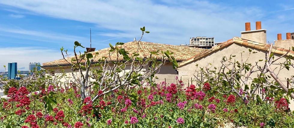 Nature en ville Marseille