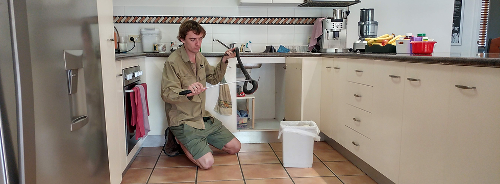 kitchen snake optim.png