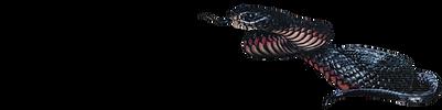 Snake Catcher Noosa logo