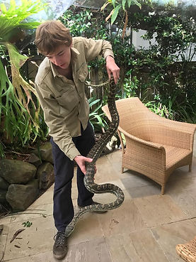 Large python