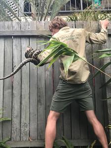 Python off a fence