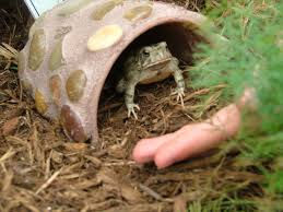 toad home(1).jpeg