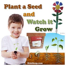 Plant-Seed_KS.jpg