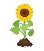 cartoon-garden-sunflower-grow-soil-carto