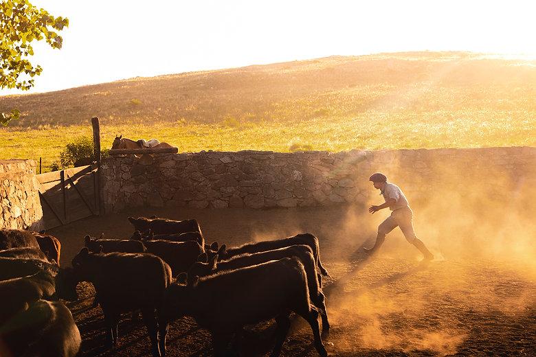 6_Gaucho&Cattle.jpg