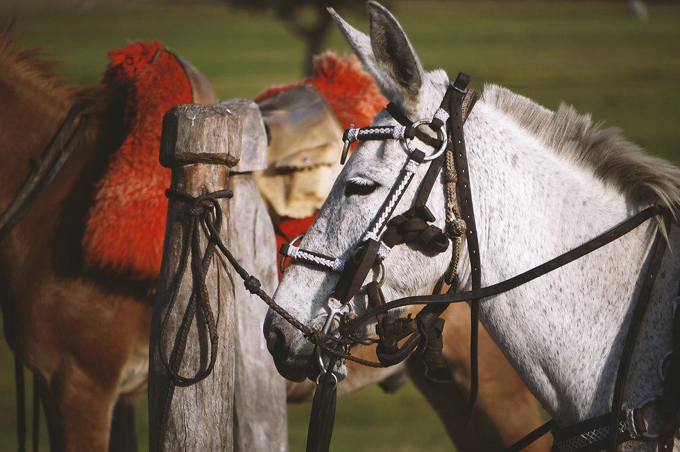 Horses at Brazil.JPG