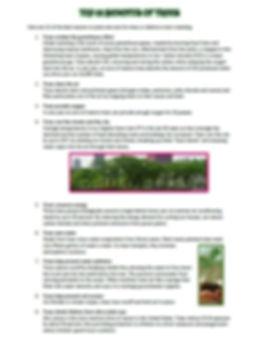 BNtrees1.jpg
