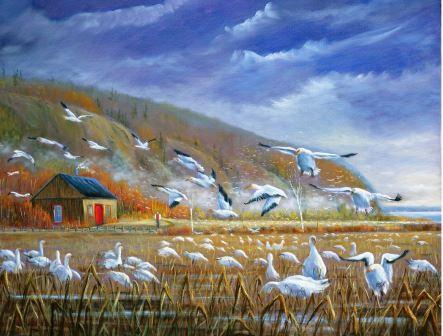 LP197 Les oies blanches