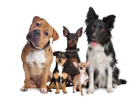 LP709 Famille de chien