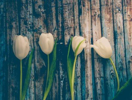 LP725 Les tulipes