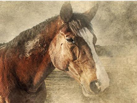 LP750 Le cheval brun