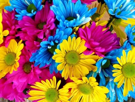 LP716 Fleurs du printemps