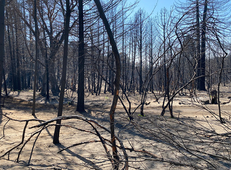 MANAGING DRAINAGE & EROSION ON PRIVATE PROPERTY & ROADS AFTER FIRE