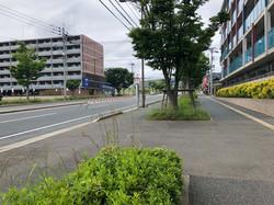 園の前の道