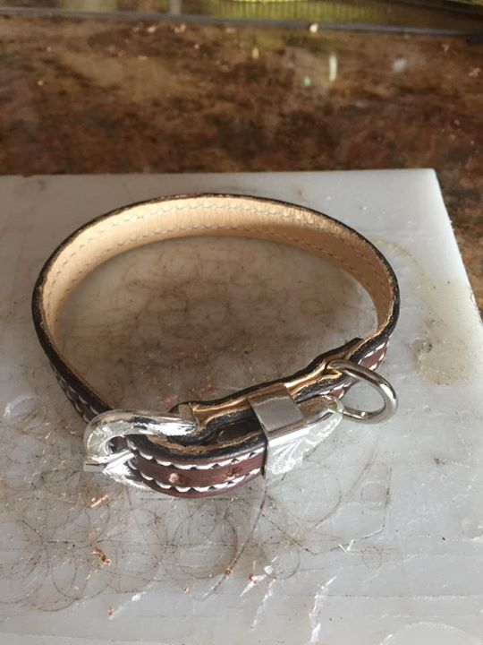 Dog collar for a small dog