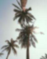 leafyplant.7.jpg