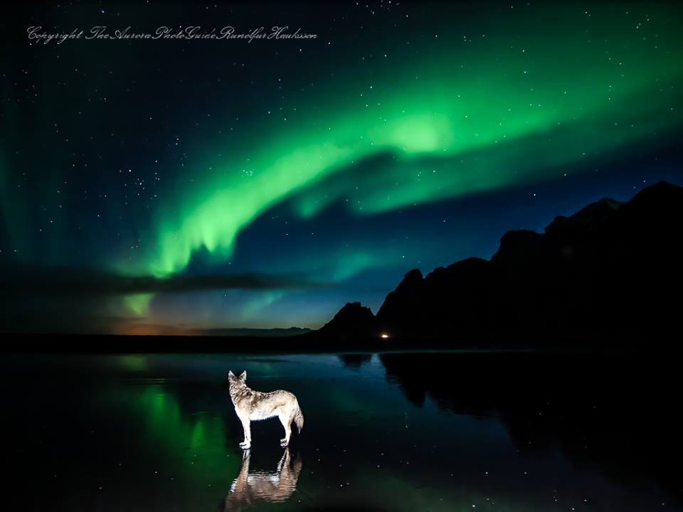'Balto and the Aurora' by The Aurora Photo Guide Iceland