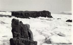 Vopnafjörður Sea Ice