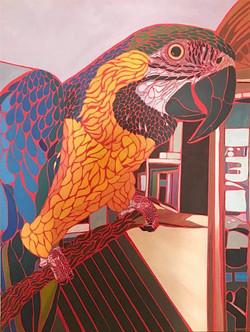 Acrylic Macaw