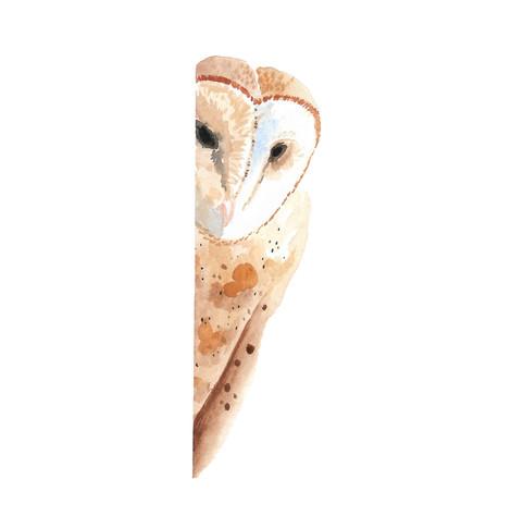 Peek-A-Boo Owl