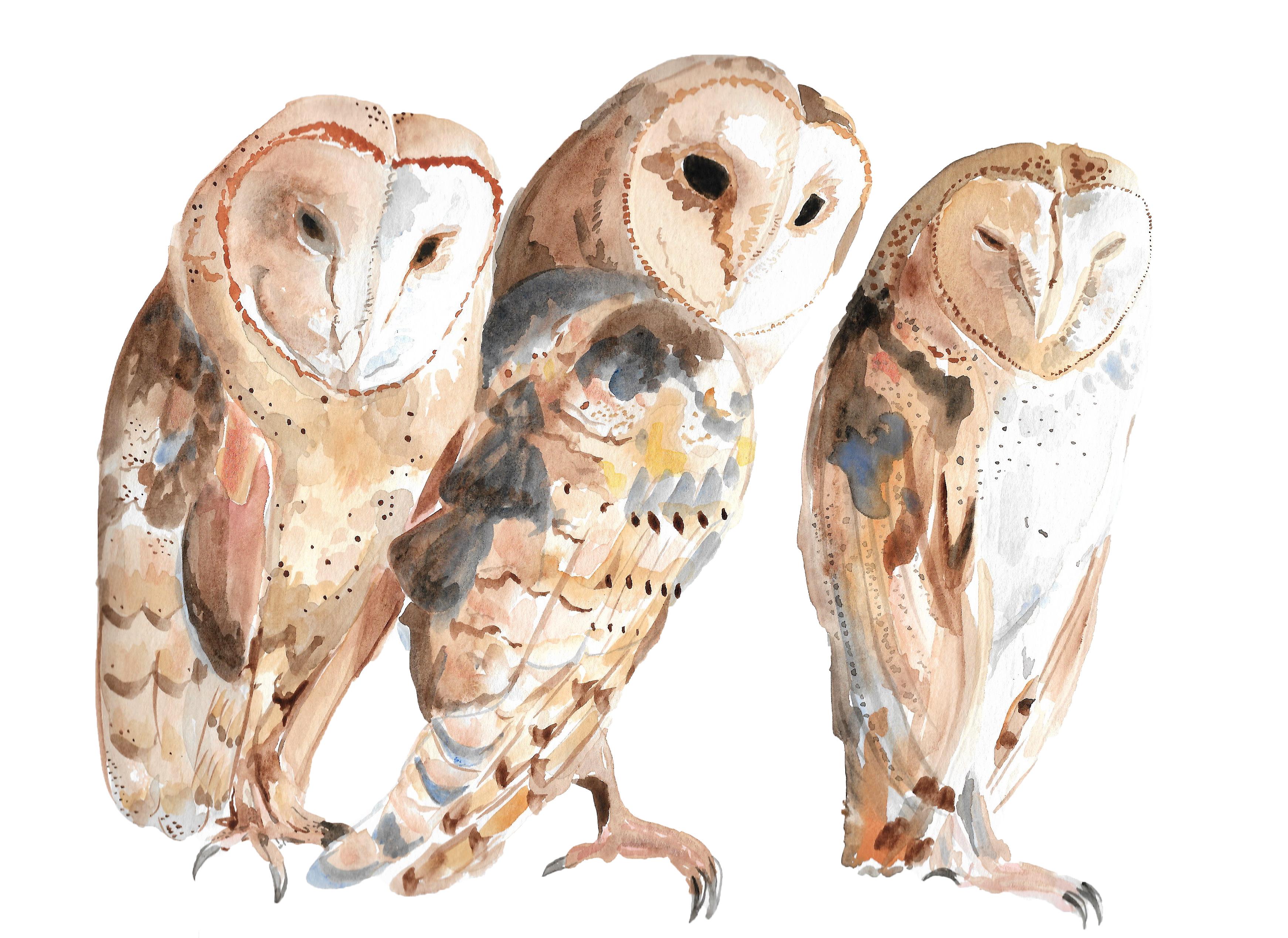 Watercolor Owl Trio
