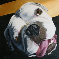 Acrylic Bulldog