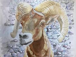 Watercolor Bighorn