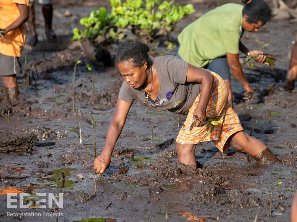 Indonesia_2018_Woman planting propagules