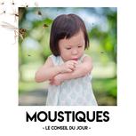 5 - Moustiques.png