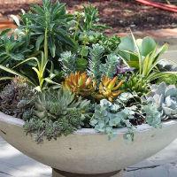 Mimi Martinson Container Garden