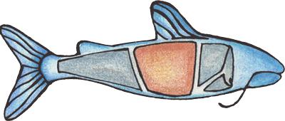 Delacata Catfish