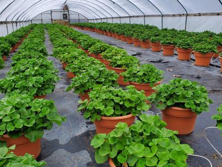 Change Also Affects Gardening