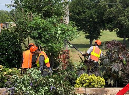 Tree Wrangling At The Garden Center