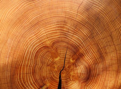2 способа подчеркнуть природную красоту ореха