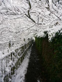 snowy cemetry
