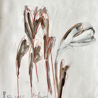 Flowers B&W 23