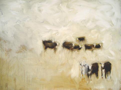 Dakota cows