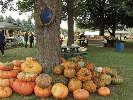 5 Family Friendly Fall Activities In The Sauk Valley Area