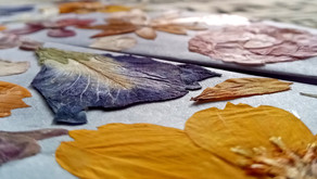 Dried or Pressed Flowers: How to Make and Use Them