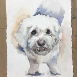 Tupelo/watercolor