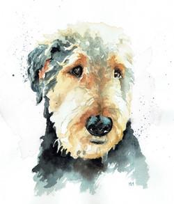 Teddy/Watercolor