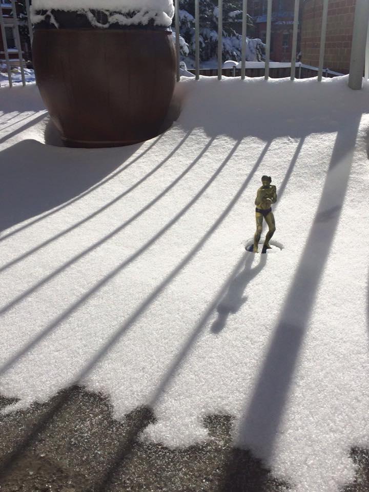 Phoenix in the snow