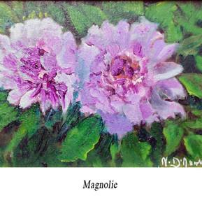 11.Magnolie.jpg