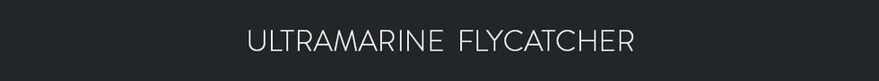 ULTRAMARINE FLYCATCHER  - Ficedula superciliaris