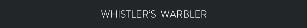 WHISTLER'S WARBLER  - Phylloscopus whistleri