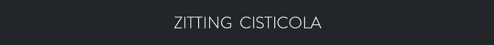 ZITTING CISTICOLA  - Cisticola juncidis
