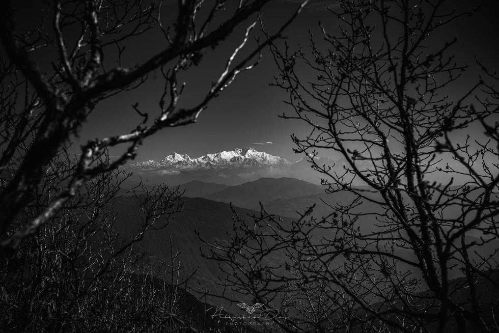 MOUNTAIN BRANCHES